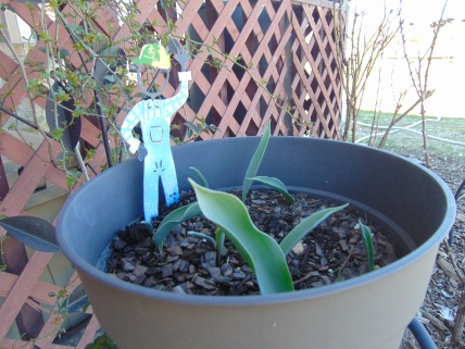 My potted tulips starting to peak out and see what the warm temperatures are about.