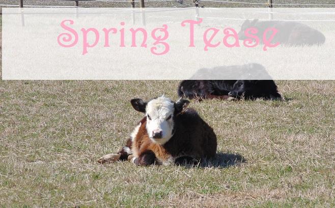 A Spring Tease
