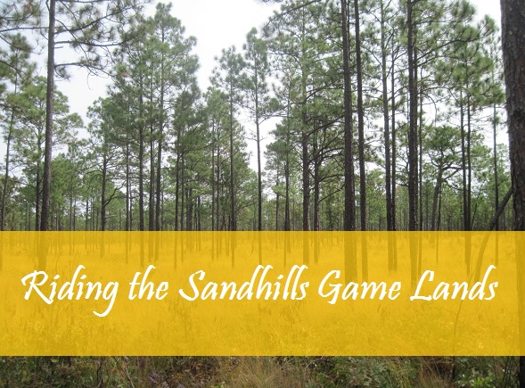 Riding the Sandhills Game Lands