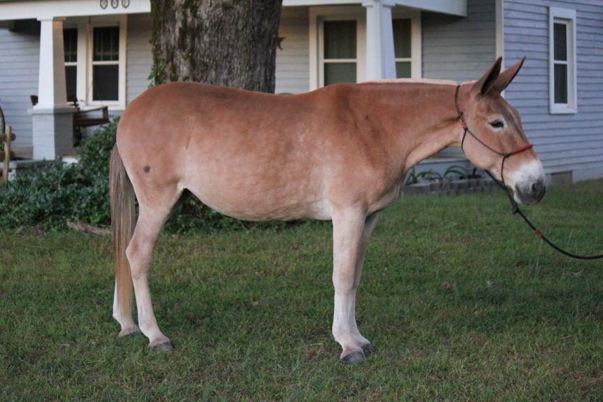 Mules 09