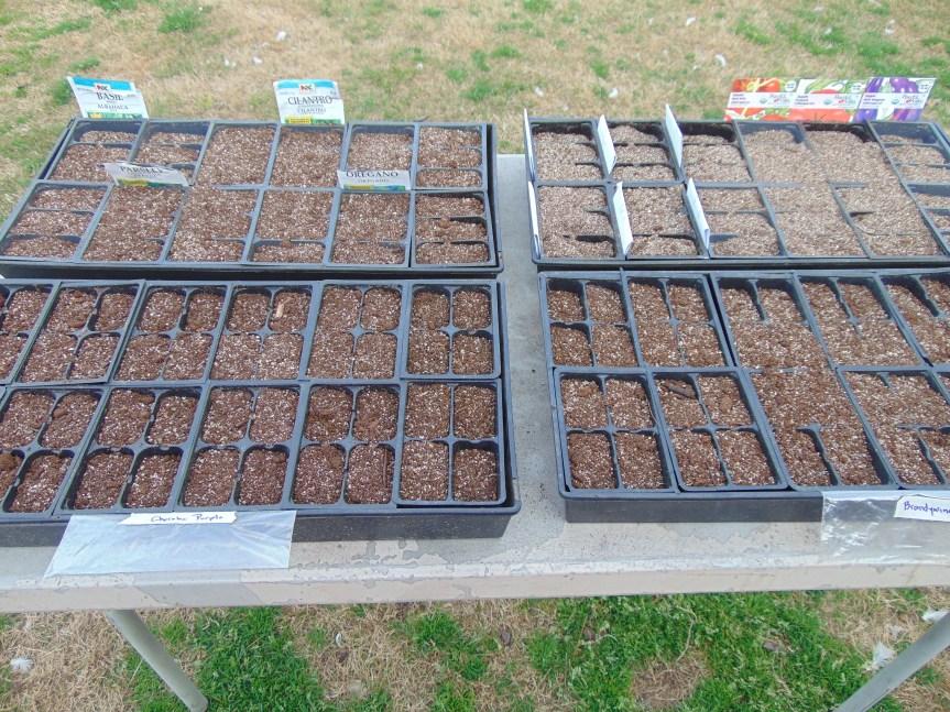 Seedlings 05