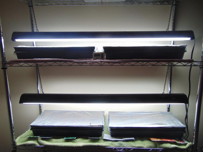Seedlings 08